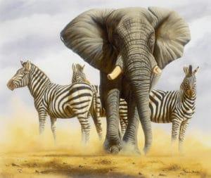 Forever Wildlife Foundation